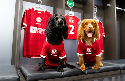 🐶 Gallery: Dogs in kit!